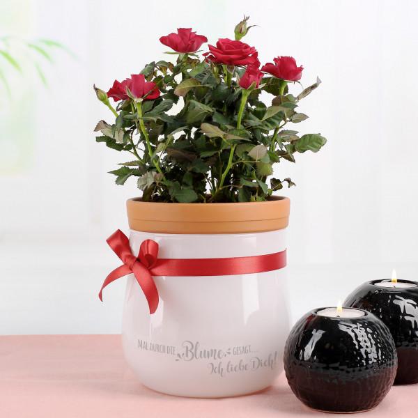 - Leonardo Blumentopf zum Valentinstag mit Wunschtext - Onlineshop Geschenke online.de