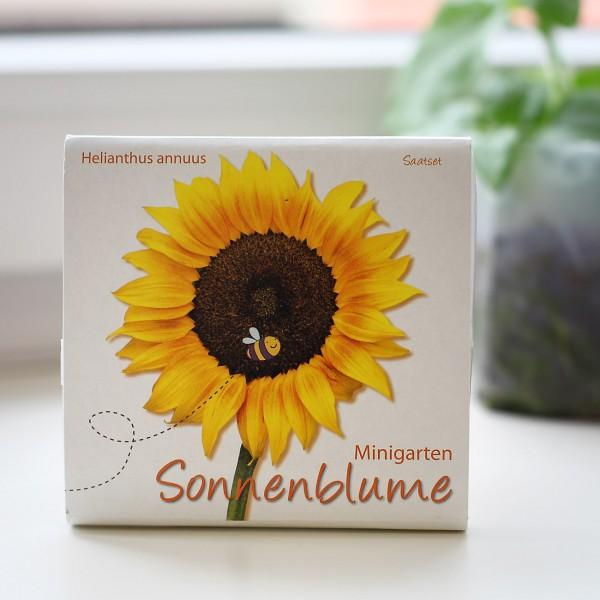 Minigarten-Sonnenblume