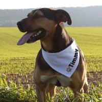 Hundehalsband mit Namensaufdruck