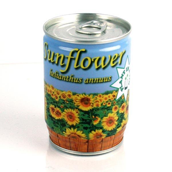 Sonnenblume aus der Dose
